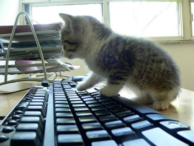 Cat_keyboard courtesy of http://upload.wikimedia.org/wikipedia/commons/a/aa/Cat_keyboard.jpg