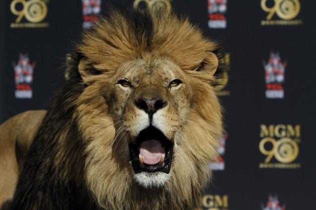1750717_me_0223_MGM_Paw_01_FO.jpg Courtesy of http://www.trbimg.com/img-52e05f56/turbine/lat-mgm-lion-photos1-la0014392851-20140122